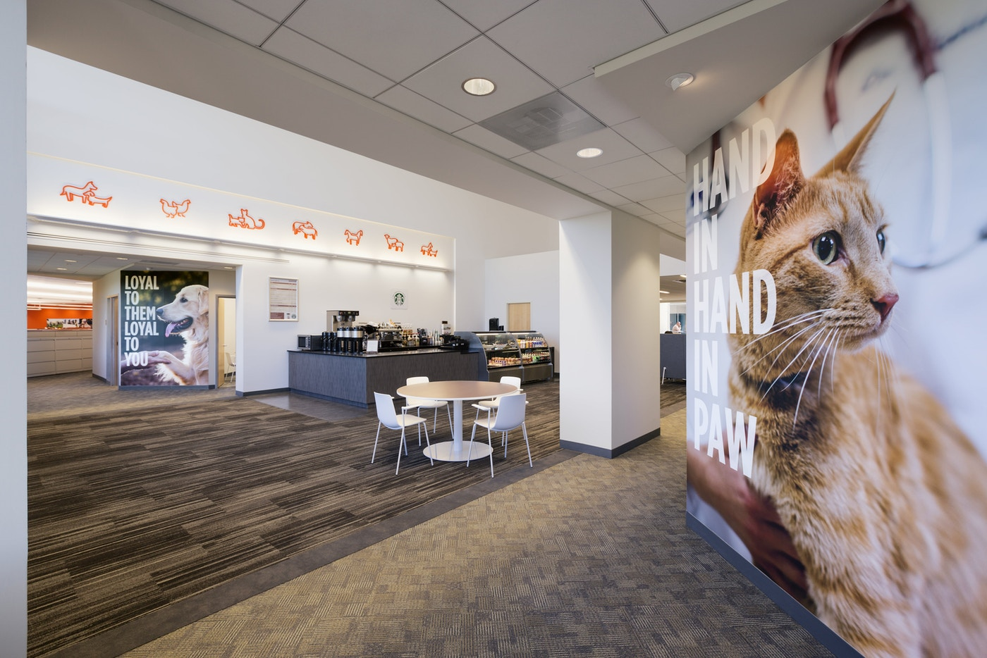 Zoetis branded environment, cat wallpaper
